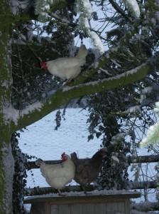 Multi storey hens