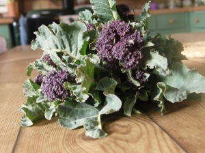 Purple Sprouting broccoli - real stars this winter