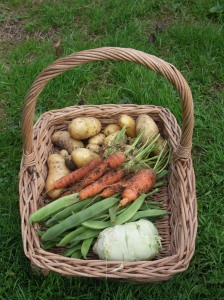A basket of produce to have with Lemon Sole from West Bay