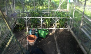 Clear greenhouse - just the green peppers to come out