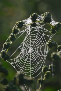 Webs in the mists