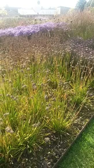 Oudolf - drifts of perennials