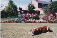 Loving those begonias