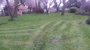 December mow - the mole hill reappeared within minutes