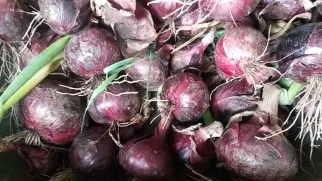 Red Barron Onions