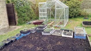 Raised bed and seedlings