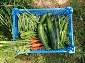 French, Runners, carrots, mangetouts, courgettes