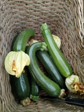 """What a Good Year for the Courgettes..."""
