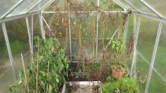 Greenhouse in need of clearance