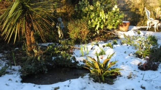 Snowy garden - this will be a blaze of colour in June...