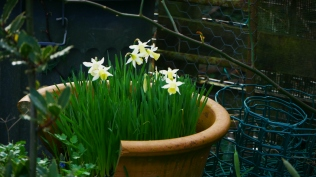 Dafs surviving despite their broken home