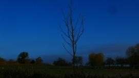 Josh's Tree